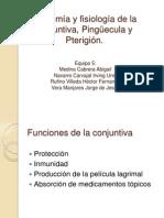 Anatom ¡a y fisiolog ¡a de la conjuntiva, Ping  ecula.pptx