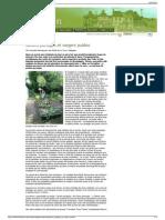 villes en transition  jardins partags et vergers publics