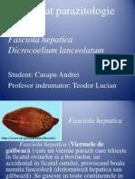 Proiect Fasciola hepatica Si Dicrocoelium lanceolatum