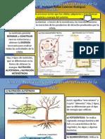 Tema 5 Nutricion Celular