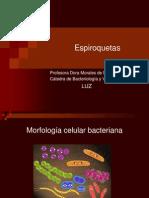 Clase Espiroquetas