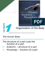 L1Organization of Body