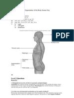 T1 Organization of BodyQAStudent Revised