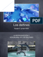 EXP_01_E05_4020_Delfines.ppt