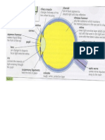eye diagram with labels and definitions