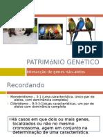 Património Genético (Interacção génica, Periquitos)