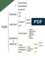 ESQUEMA - TEJIDO