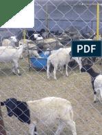 Saberes campesinos y medicina animal