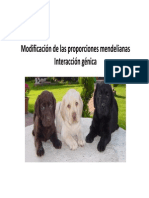 Modificacionproporcionesmendelianas_8550