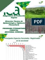 Situacion Fitosanitaria Forestal Cordoba Colombia Sem01_2013