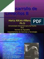 lec4_desaarrollo_linfocitos_b