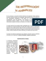 respiracinenanimales-130516101158-phpapp01
