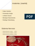 apresentação anatomia