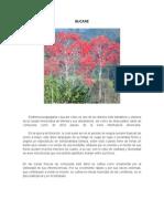 Flora y Fauna Venezolana