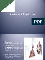 Human Anatomy Part 2