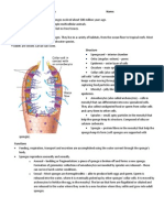 phylum porifera notes