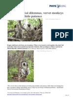 2013 03 Social Dilemmas Vervet Monkeys Patience