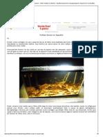 Artigo Aquaflux_ Folhas Secas no Aquário • (Autor_ Mateus Camboim) • Aquaflux Aquarismo e Aquapaisagismo