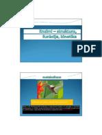 Enzimi - Struktura, Funkcija, Kinetika-1