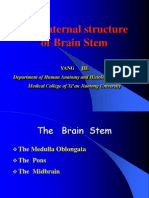 15 the Internal Structures of Brain Stem