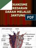 Peredaran Darah Melalui Jantung