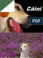 Câini Cos 6.4