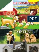 Animal e Domestic