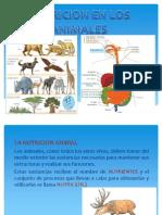 La Nutricion en Los Animales.