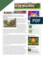 BÍBLIA DAS VARIEDADES DE MACONHA_ Colheita, Secagem e Cura de suas Plantas de Maconha