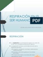 RESPIRACIÓN EN EL SER HUMANO