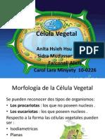 Celula Vegetal (farmacobotanica).pptx