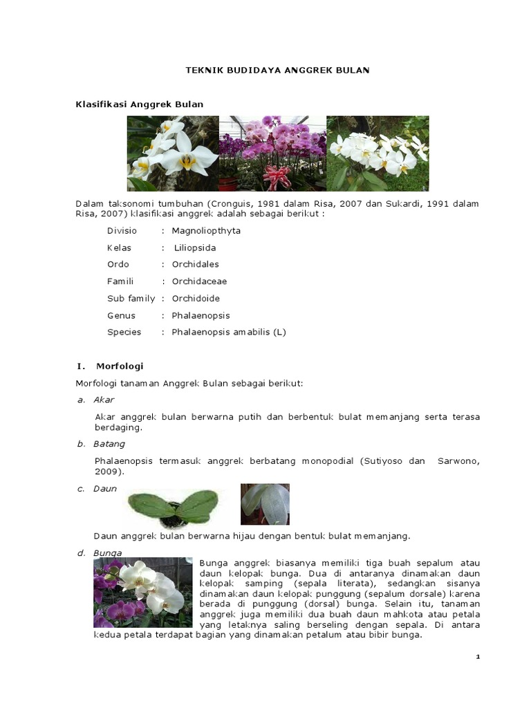 Contoh Teks Laporan Hasil Observasi Tentang Bunga Anggrek Bulan Kumpulan Contoh Laporan