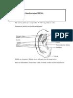 Catatan Dokter Muda Anatomi Telinga