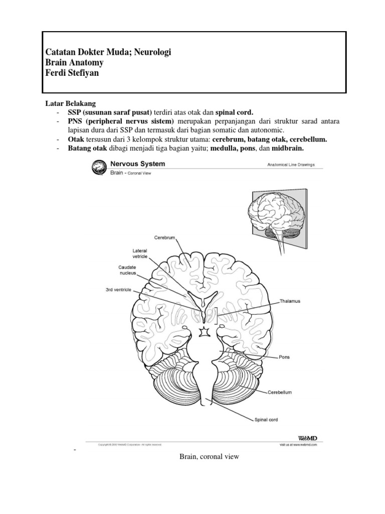 Catatan Dokter Muda Anatomy Otak | Brainstem | Basal Ganglia
