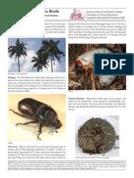 Coconut Beetlehfgjxc