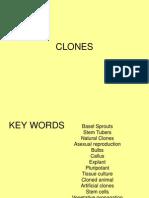 a2 clones