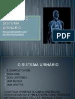DOENÇAS DO SISTEMA URINÁRIO 1