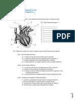 FichaTrabnº__CardiovascularCN9