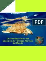 Una Introducción a las Especies de Tortugas Marinas del Mundo