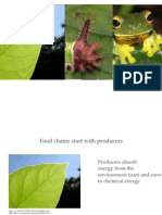 foodchainsandfoodwebs-111014233237-phpapp01