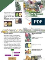 IFRURI Profile Print