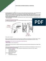 ZuSanLi Tačka dugovečnosti ili tačka od stotinu bolesti na vašem telu.doc