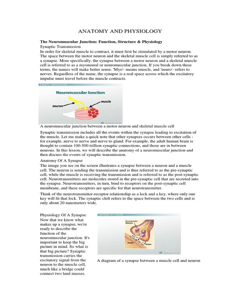 Magnífico Anatomy And Physiology Of Myasthenia Gravis Modelo ...