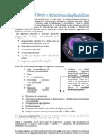 Citosol e inclusiones citoplasmáticas