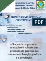 gonadas - Cópia