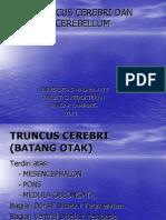 Truncus Cerebri & Cerebellum