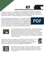 El Bosque Chileno Pablo Neruda