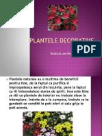 Plantele Decorative