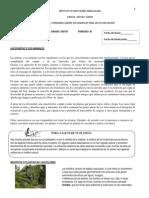 CLASIFICACIÓN PLANTAS Y ANIMALES - ACTIVIDADES