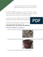 O mirtilo é uma espécie que exige solos arenosos
